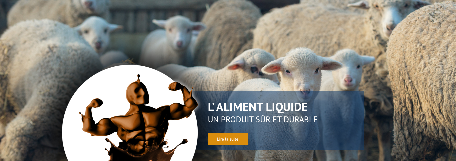 Troupeau de moutons au champ