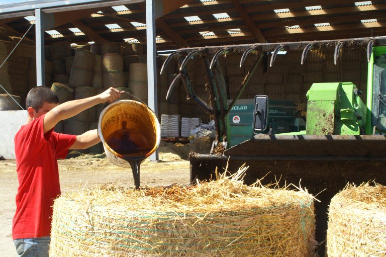 aliment liquide versé du seau sur fourrage grossier par l'éleveur